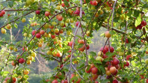 Mein Leben trägt Früchte – auch ohne Kinder
